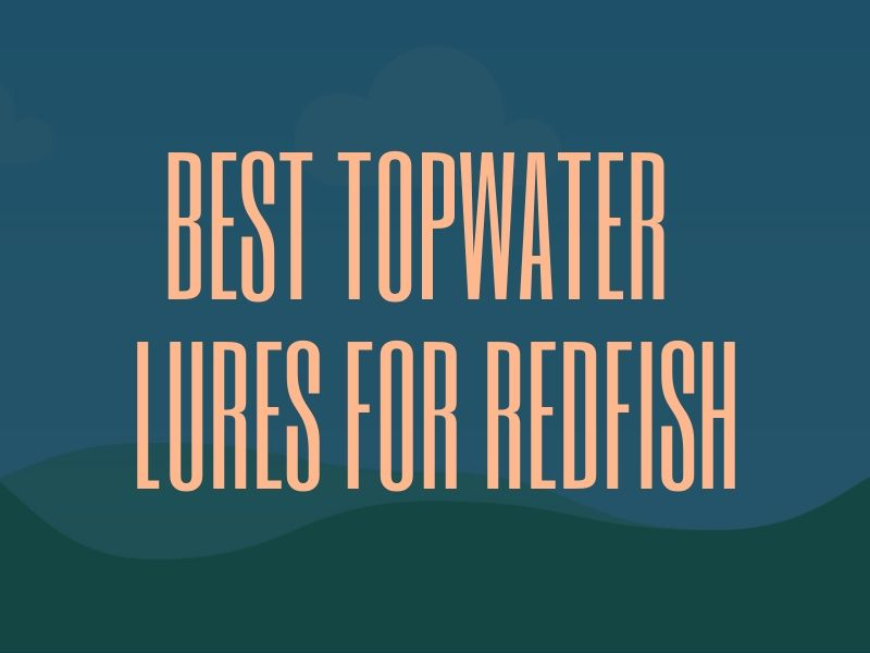 Best Topwater Lures for Redfish