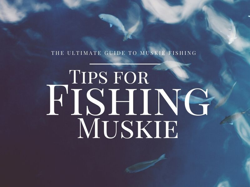 Muskie Fishing Guide - Tips to Catch Muskie