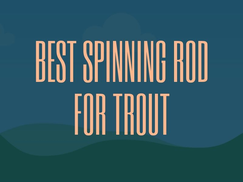 Spinning Rod for Trout Guide