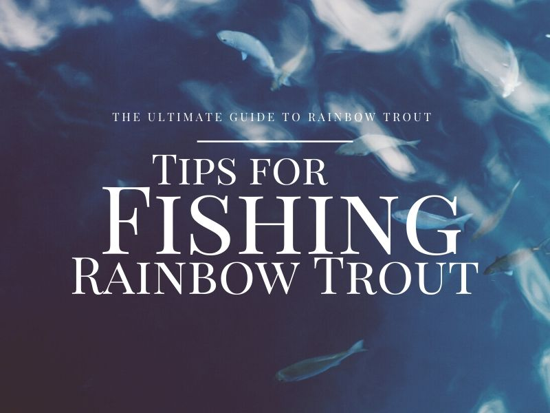 The Ultimate Guide to Rainbow Trout Fishing