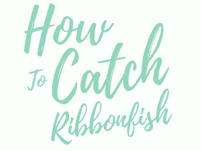 How to Catch Ribbonfish