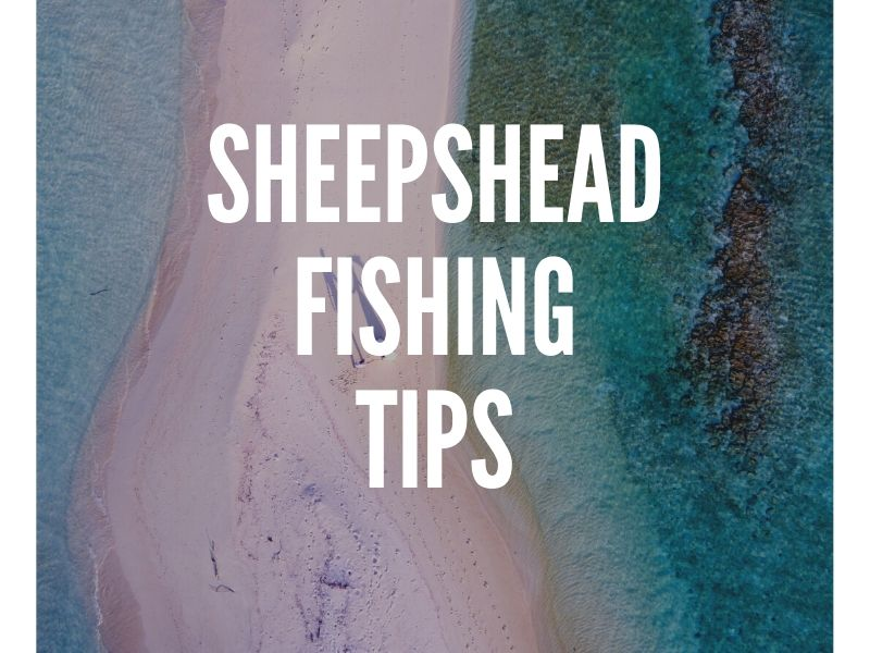 Sheepshead Fishing Tips