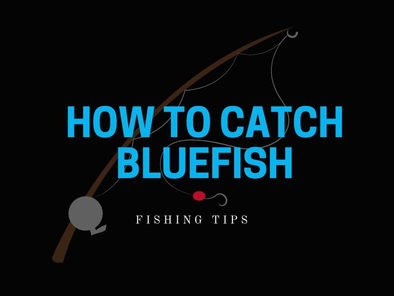 Bluefish Fishing Tips