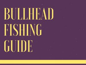 Bullhead Fishing Tips