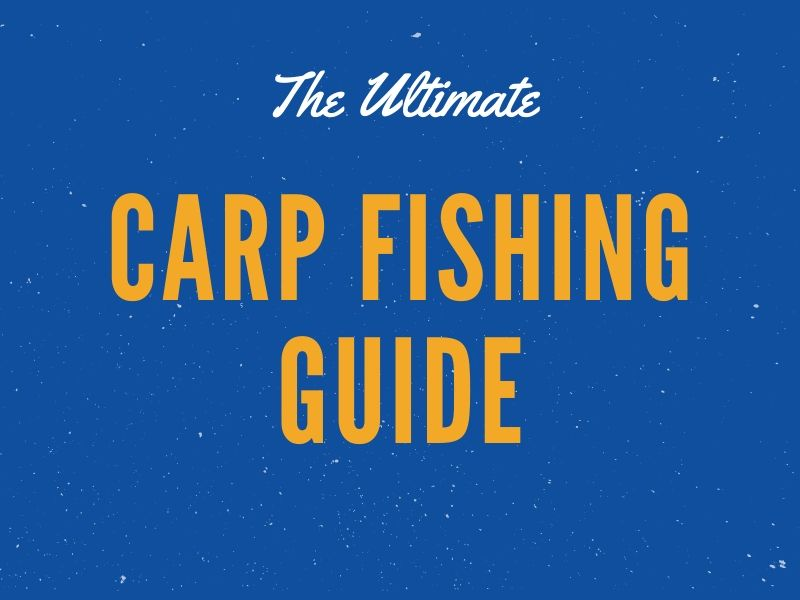 How to Catch Carp Fishing Tips