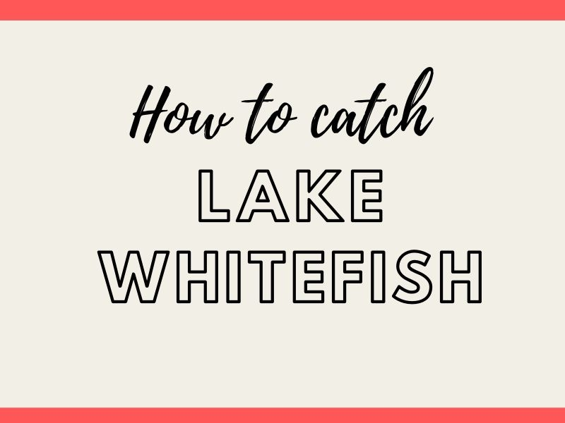 Lake Whitefish Fishing Tips