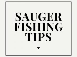Sauger Fishing Tips