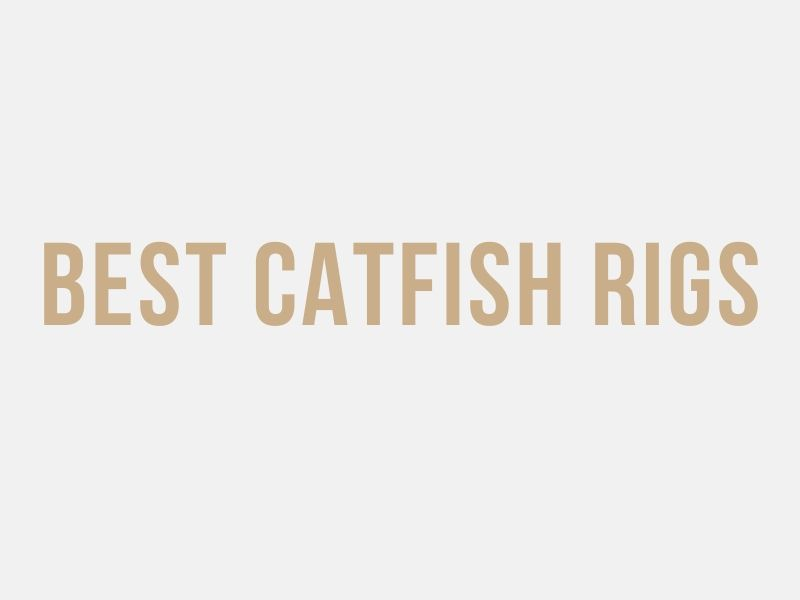 Best Catfish Rigs