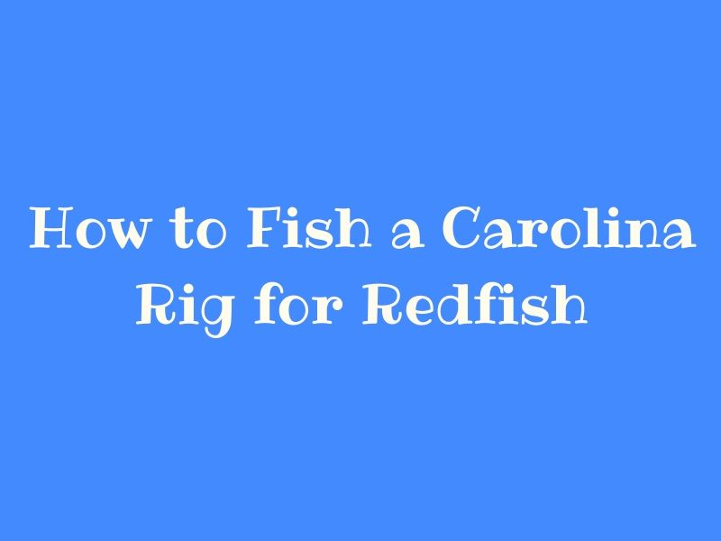 Carolina Rig for Redfish