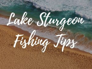 Lake Sturgeon Fishing Tips