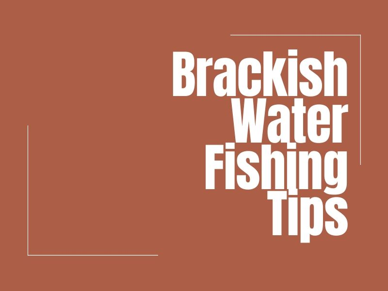 Catching Brackish Water Fish