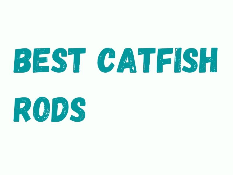 Catfish Fishing Rods