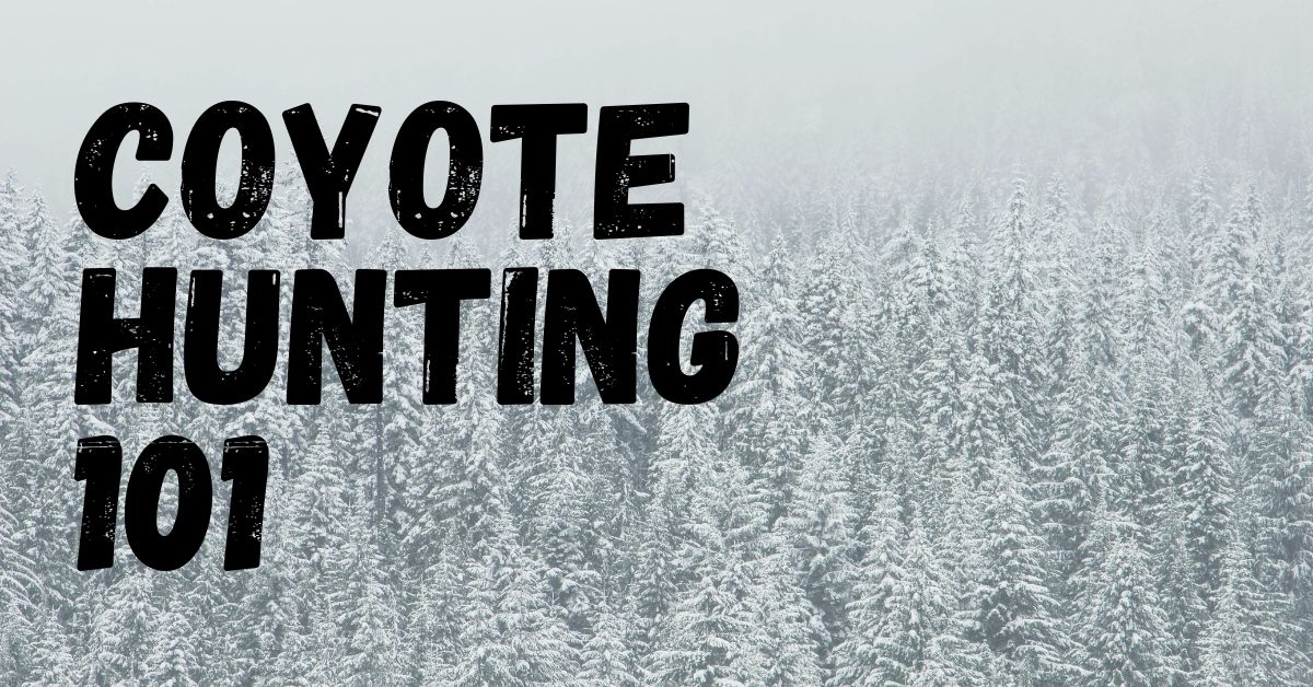 Coyote Hunting Tips