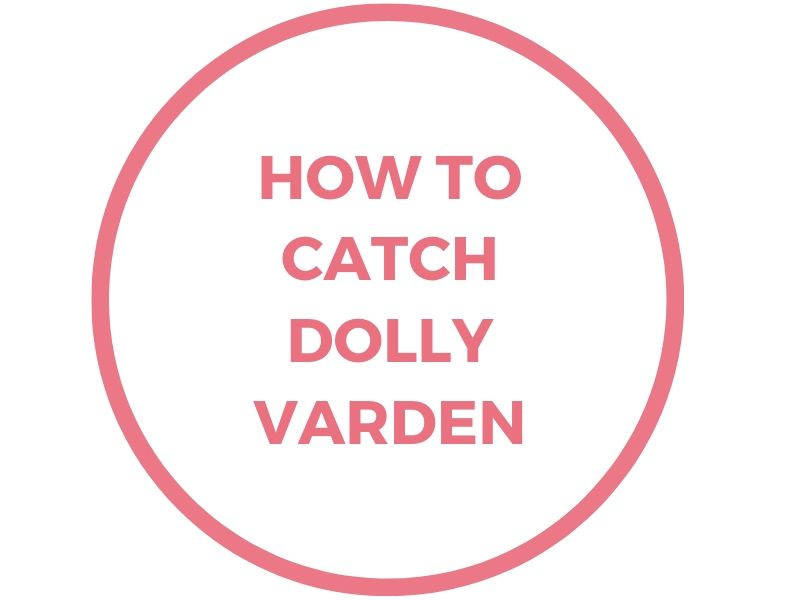 dolly varden fishing