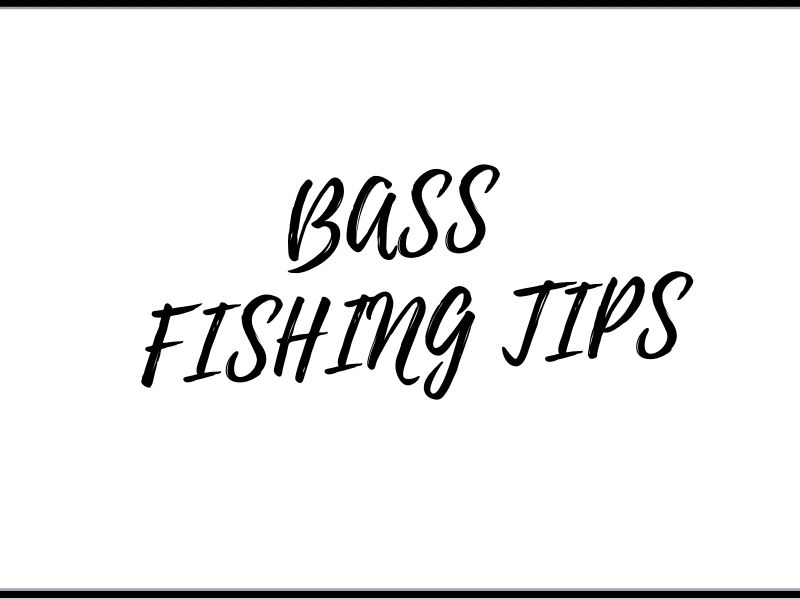 fishing-bass